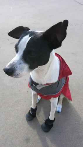 Well dressed dog